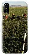 Wheat And Elevated Carbon Dioxide IPhone Case