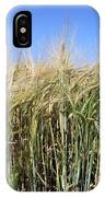 Wheat Field (triticum Sp.) IPhone Case