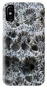 White Coral 1 Koh Kut Thailand IPhone Case