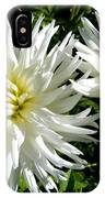 White Dahlias In Autumn  IPhone Case