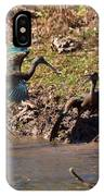 White-faced Ibis Mating Behavior In Early Spring IPhone Case