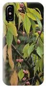 Winterberry Euonymus 'dart's Pride' IPhone Case