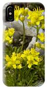 Yellow Whitlow-grass (draba Aizoides) IPhone Case