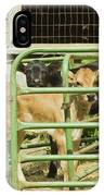 Young Calf In Fence Pen Near Barn Summer Maine IPhone Case