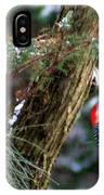 Young Red-bellied Woodpecker IPhone Case