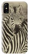 Zebra Trio IPhone Case