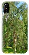 Birch Tree In Afternoon IPhone Case