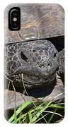 Gopher Tortoise Close Up IPhone Case
