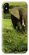 African Elephant In Swamp IPhone Case