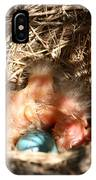 American Robin Nestlings IPhone Case