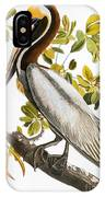 Audubon: Pelican IPhone Case