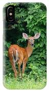 Backyard Deer IPhone Case