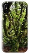 Beech Tree IPhone Case