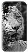 Big Cats 4 IPhone Case