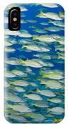 Bluestripe Snapper IPhone Case