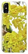 Caesalpinia Cacalaco In Huntington Desert  Gardens In San Marino-california  IPhone Case