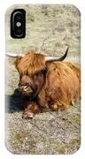 Cattle Scottish Highlanders, Zuid Kennemerland, Netherlands IPhone Case