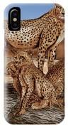 Cheetah Family Tree IPhone Case
