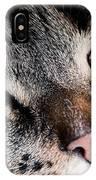Cute Cat Close-up Portrait IPhone Case