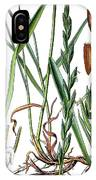 Elymus Repens, Commonly Known As Couch Grass IPhone Case