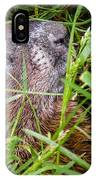 Fly Resting On The Groundhog's Nose IPhone Case