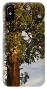 Giant Sequoia IPhone Case