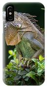 Green Iguana Iguana Iguana, Sarapiqui IPhone Case