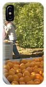 Harvesting Navel Oranges IPhone Case
