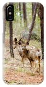 Mule Deer In The Pike National Forest IPhone Case