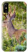 Mule Deer IPhone Case