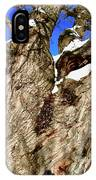 Old Willow Tree IPhone Case