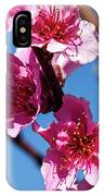 Peach Blossom IPhone Case