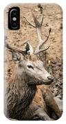Red Deer Stag Cervus Elaphus Takes A Mudbath To Cool Down On Aut IPhone Case