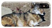 Resting Wolf IPhone Case