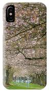 Rows Of Cherry Blossom Trees In Spring IPhone Case