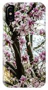 Saucer Magnolias In Central Park IPhone Case