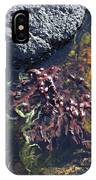 Seaweed Growing In A Rockpool On The Shore Roundstone County Galway Ireland IPhone Case