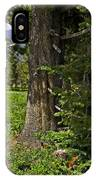 Tree In Vail IPhone Case