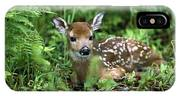 White-tailed Deer Odocoileus IPhone Case