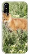 Young Red Tailed Fox IPhone Case