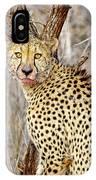 1022 Cheetah IPhone Case