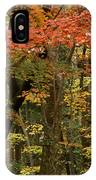 Forest In Autumn IPhone Case