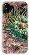 Sea Anemones IPhone Case
