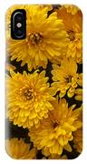 Yellow Chrysanthemums IPhone Case