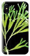 Rockweed Seaweed, X-ray IPhone Case