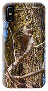 Bare Tree Branches In Early Spring IPhone Case