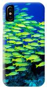Bluestripe Snapper IPhone Case