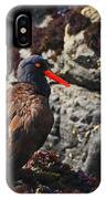 Black Oystercatcher IPhone Case