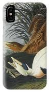 Eider Duck IPhone Case