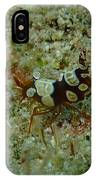 Squat Anemone Shrimp IPhone Case